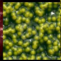 Bacterias Fotosintéticas