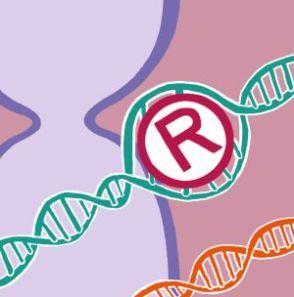 nadie inventa un gen